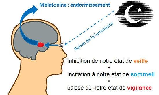 fonctionnement-melatonine-sommeil