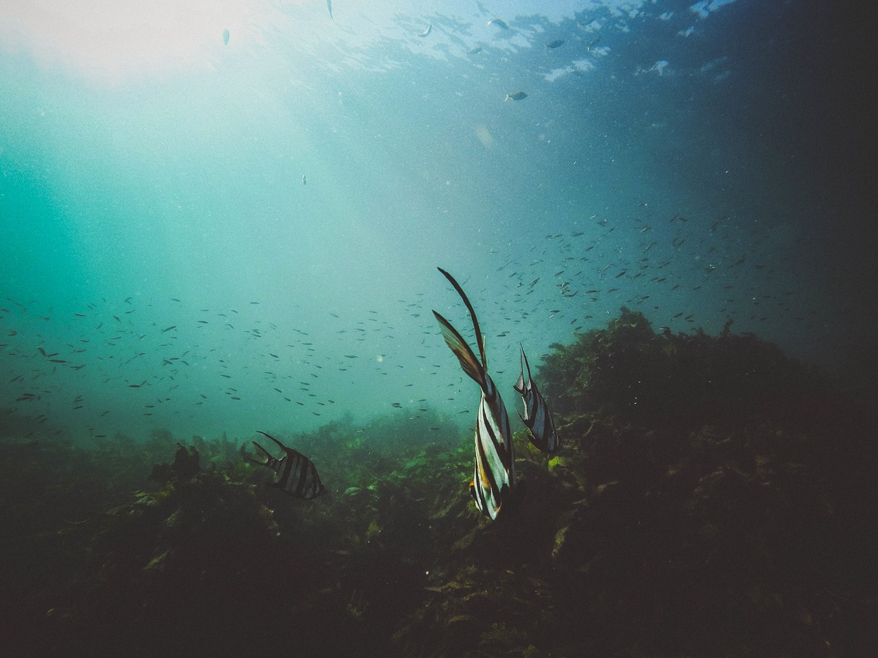 Spiruline : bienfaits & conseils pour acheter la meilleure spiruline bio
