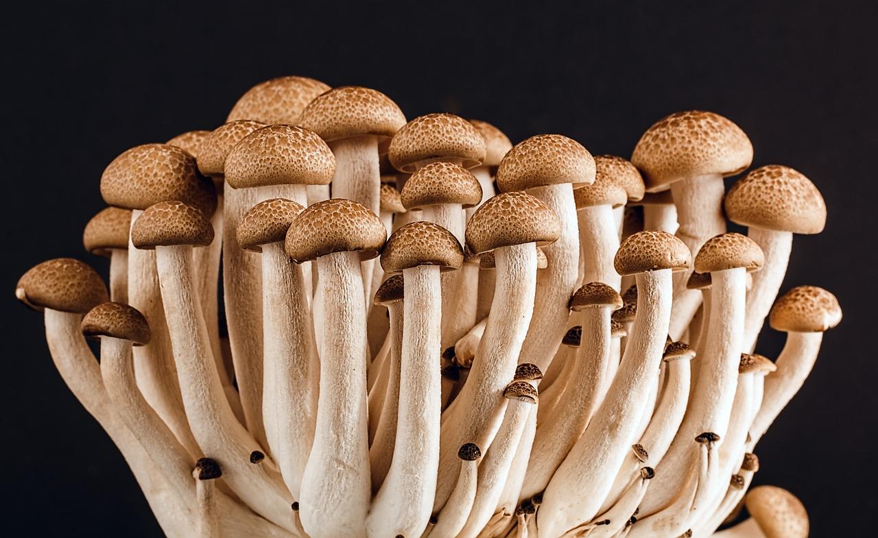 Traitement naturel de la mycose des ongles : avis sur la Méthode Ancestrale