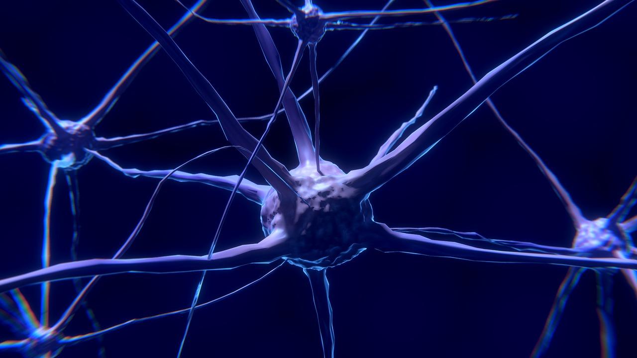 Cerveau & addiction : le cervelet joue un rôle crucial dans la dépendance